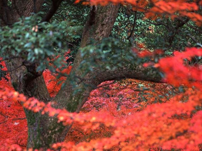 50 великолепных пейзажей Японии 27