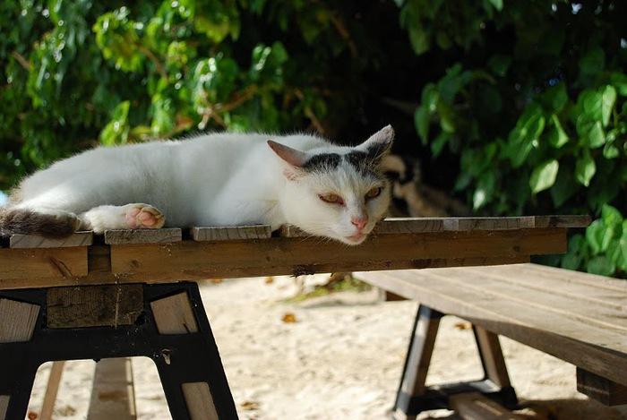 Taketomi Island - Остров Такетоми 75014