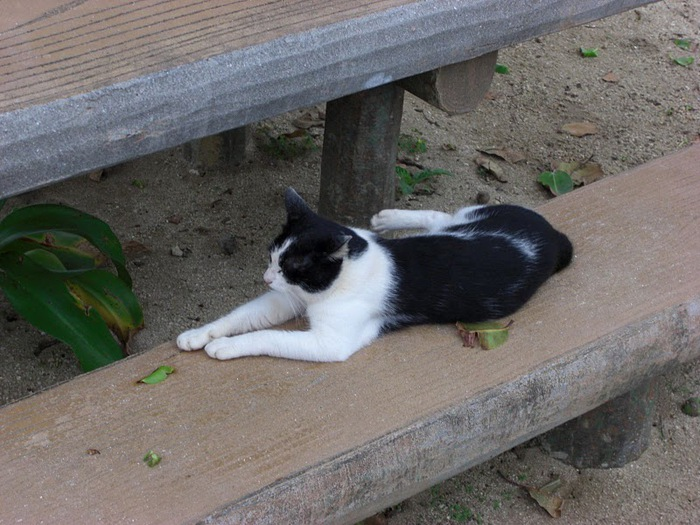 Taketomi Island - Остров Такетоми 11452