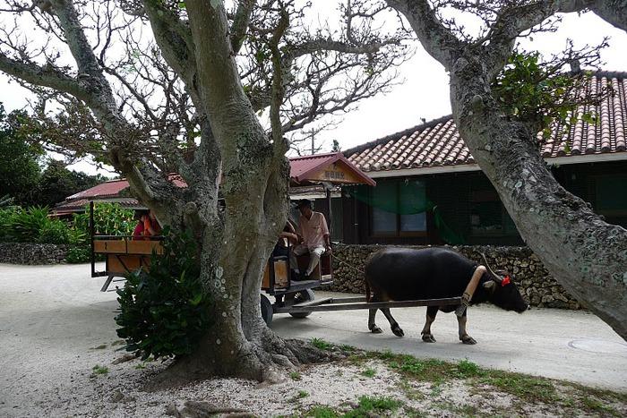 Taketomi Island - Остров Такетоми 72222