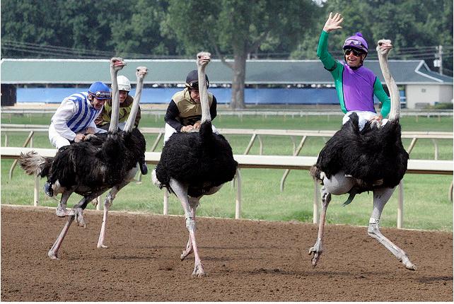 В Украине прошли гонки на страусах 23885