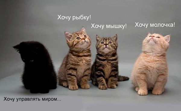 http://img1.liveinternet.ru/images/attach/c/2//68/501/68501229_14.jpg