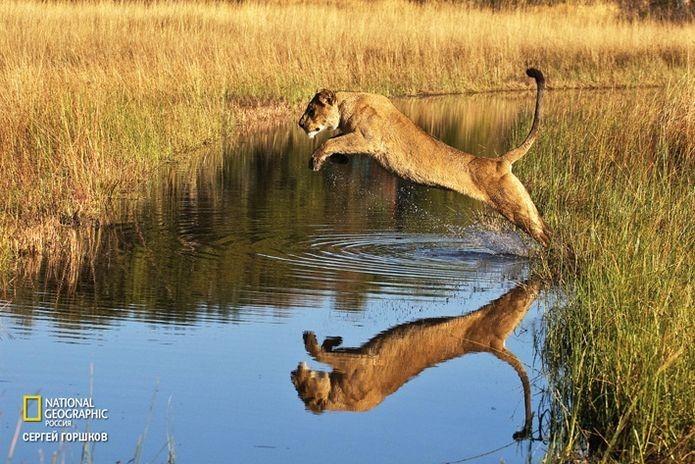 Фотовыставка «Живая природа Ботсваны» 3