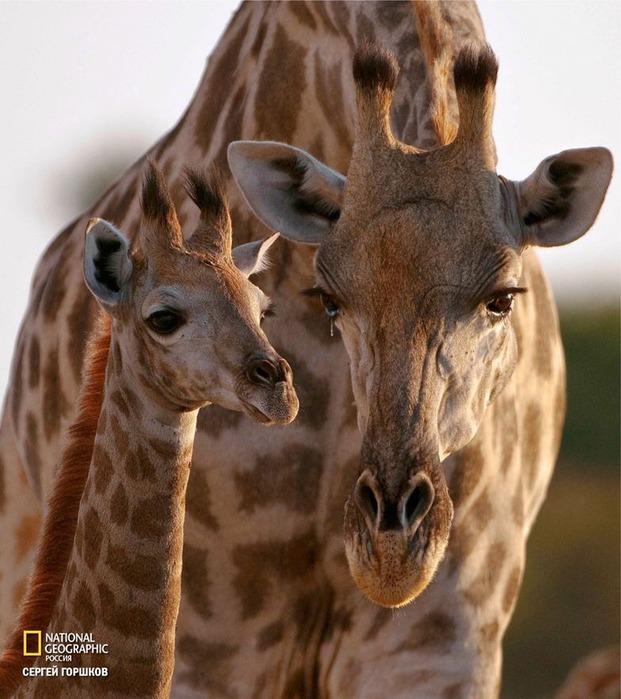 Фотовыставка «Живая природа Ботсваны» 7
