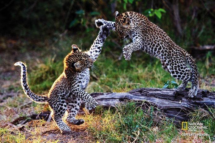 Фотовыставка «Живая природа Ботсваны» 9