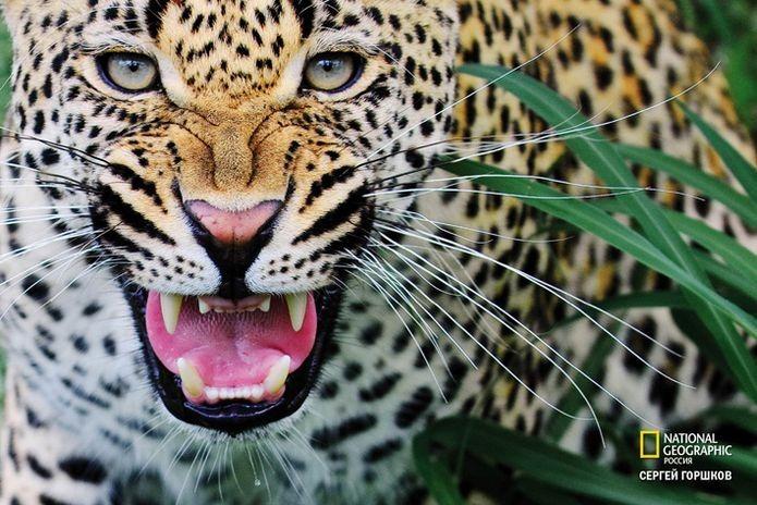 Фотовыставка «Живая природа Ботсваны» 12
