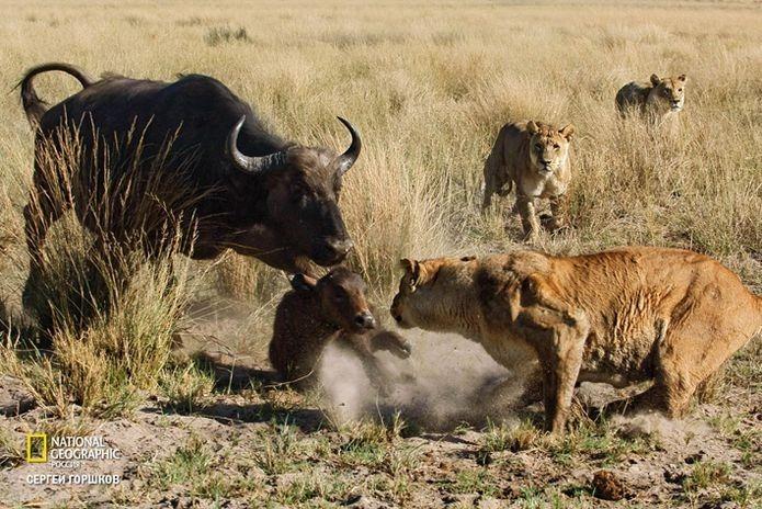 Фотовыставка «Живая природа Ботсваны» 17