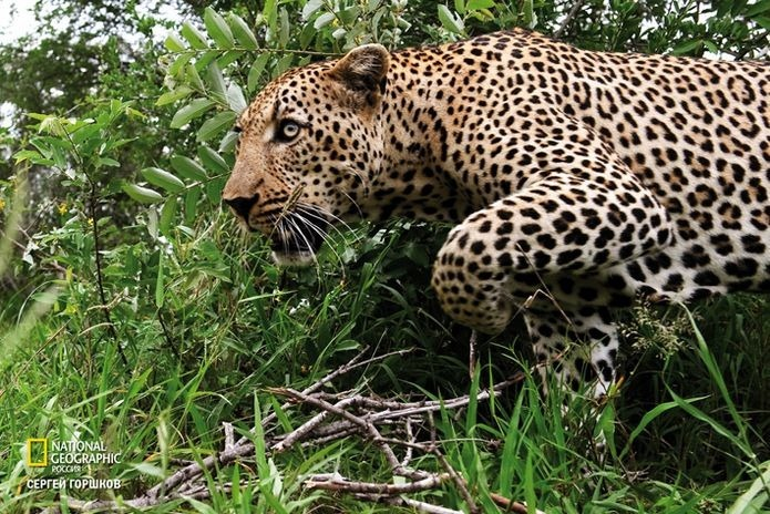Фотовыставка «Живая природа Ботсваны» 22