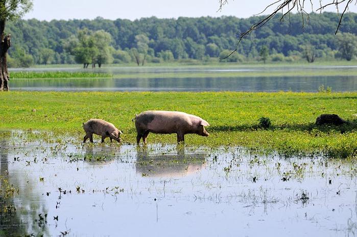 Деревянные дома в заповедном болоте - «Лоньско поле» 51971