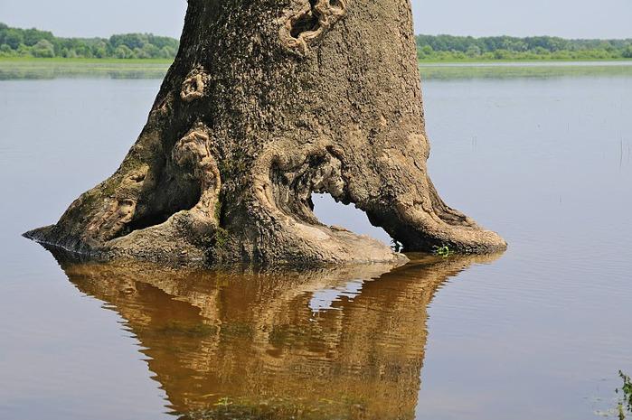 Деревянные дома в заповедном болоте - «Лоньско поле» 65461