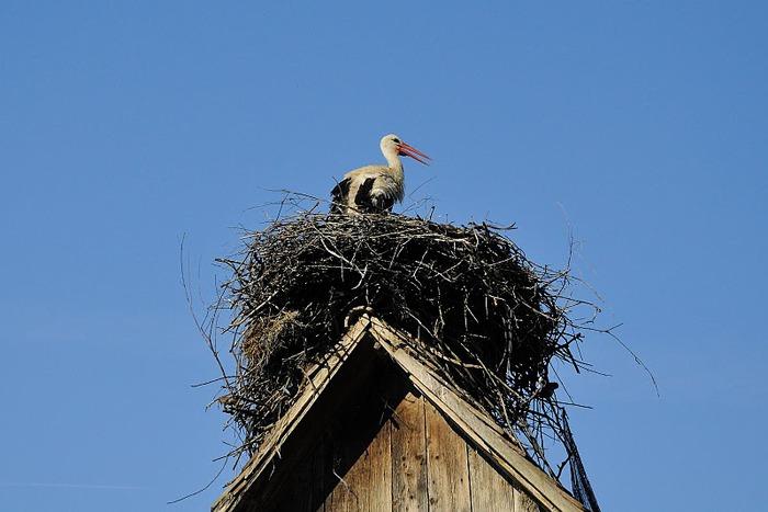 Деревянные дома в заповедном болоте - «Лоньско поле» 11942
