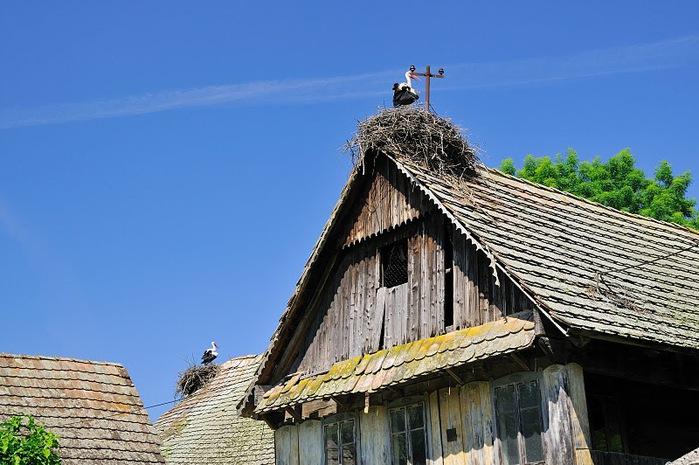Деревянные дома в заповедном болоте - «Лоньско поле» 91826