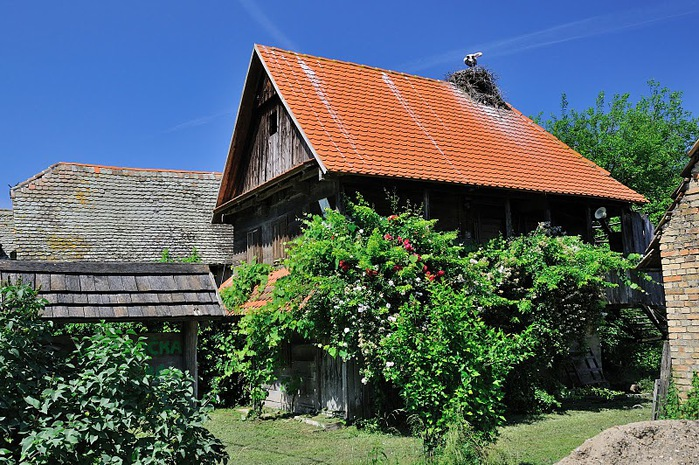 Деревянные дома в заповедном болоте - «Лоньско поле» 53128