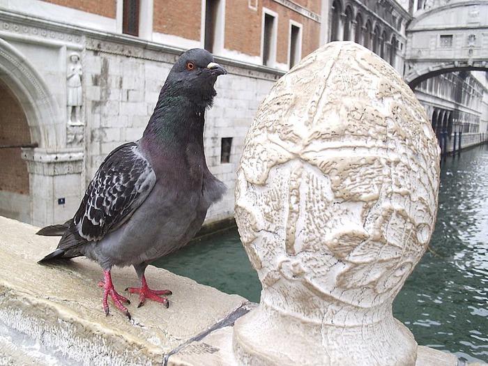 Венеция — сказка 30573