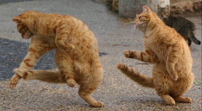 Видеохит! Танцующая кошка