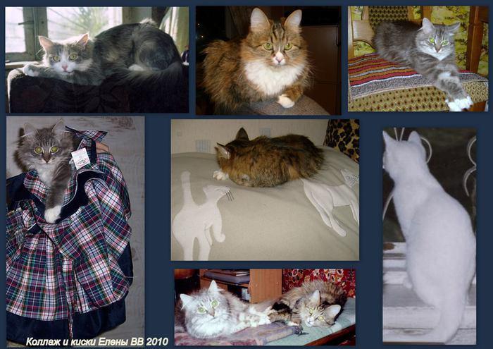 Кошки на отдых - коллаж