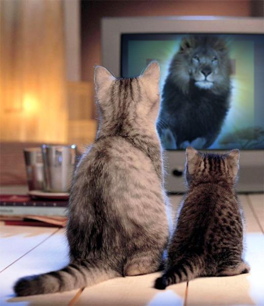 смотрим кино, кошкин дом