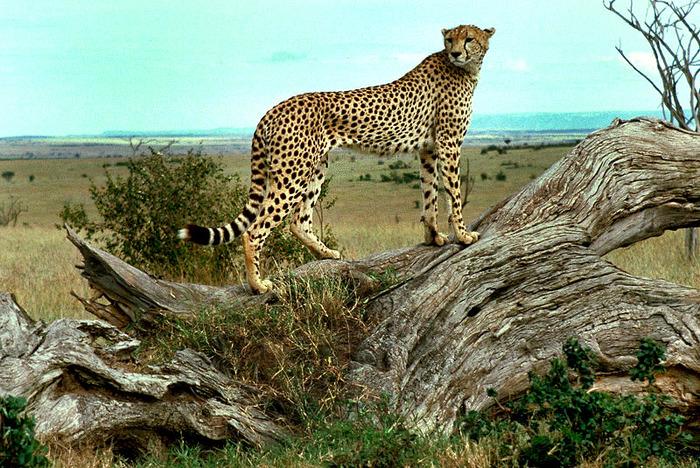 Animals-В мире животных 48128