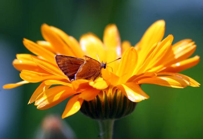 цветок и мотылёк