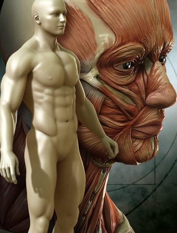 DAZ-3D, как атлас анатомии человека 3d