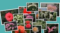 Цветы дом-музея Родена в Париже