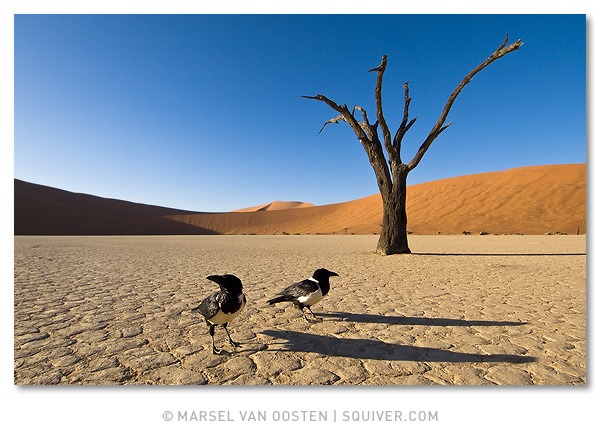 удивительные фото природы