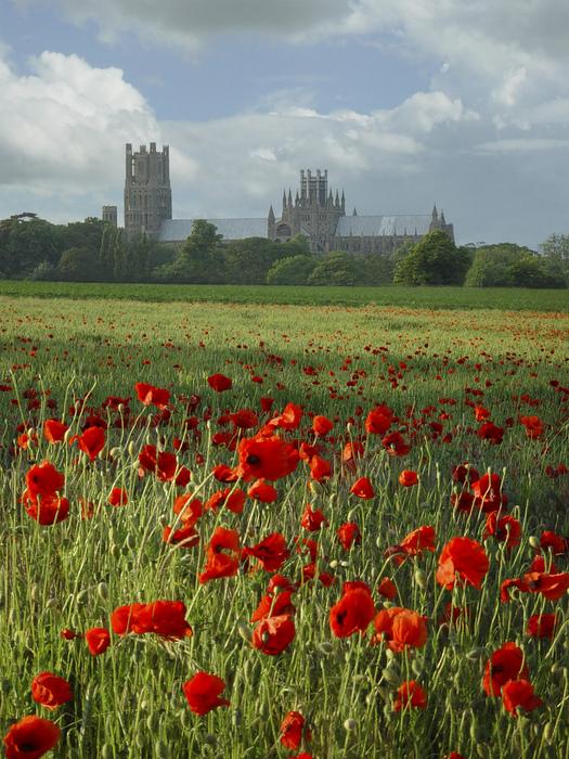 кафедральный собор Эли - (Англия). 40804