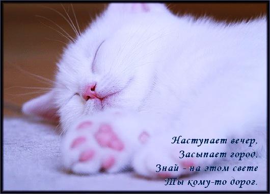 спокойной ночи классные картинки: