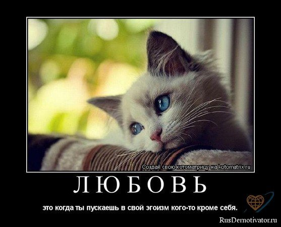 1261073543_post51121_img1 (557x450, 47 Kb)