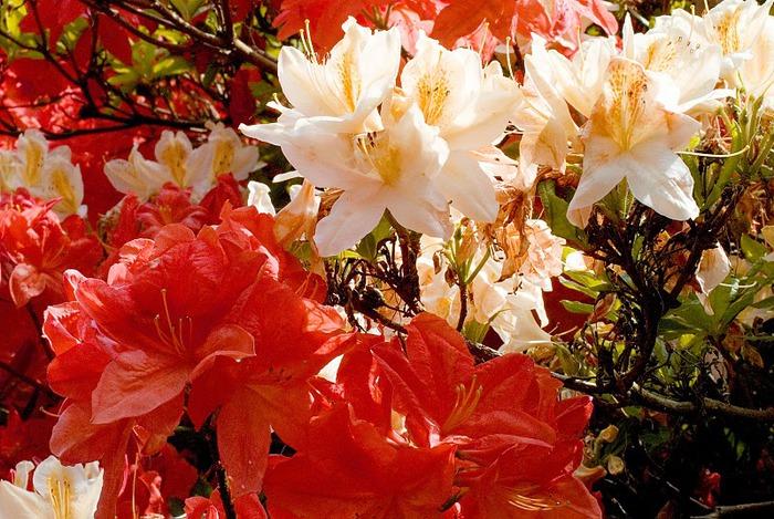Цветочное настроение. 42761