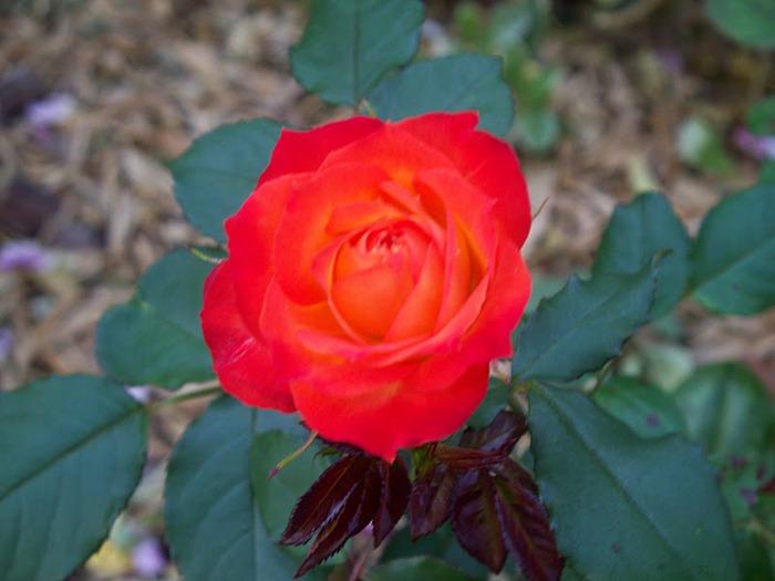 Цветочное настроение. 30931