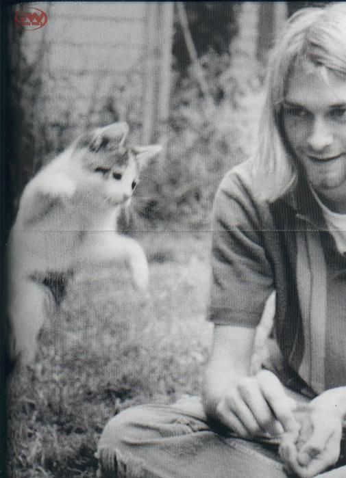 http://img1.liveinternet.ru/images/attach/c/2//70/950/70950250_kurt_cobain_cat.jpg