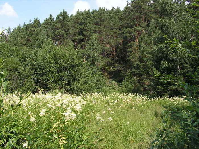 лес на Пригородном у леспромхозовских садов (700x525, 67 Kb)