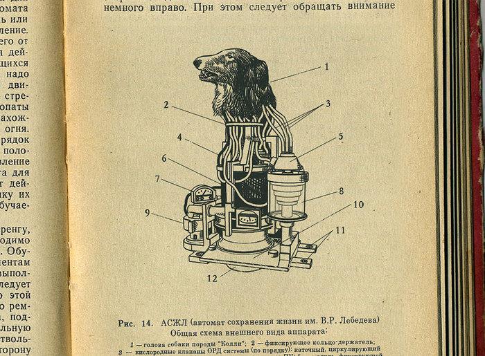 первый работающий советский биоробот