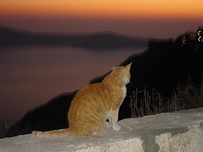 домашниe животные на острове Санторин 21949