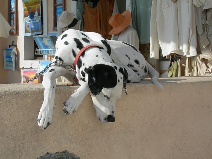 домашниe животные на острове Санторин 72407