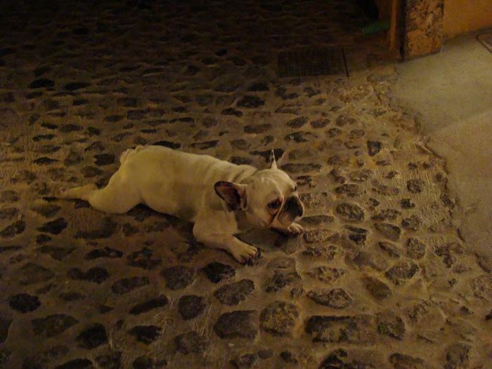 домашниe животные на острове Санторин 47119
