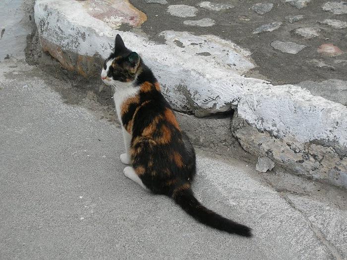 домашниe животные на острове Санторин 15324