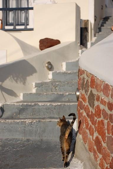 домашниe животные на острове Санторин 29118