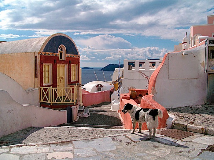 домашниe животные на острове Санторин 39580