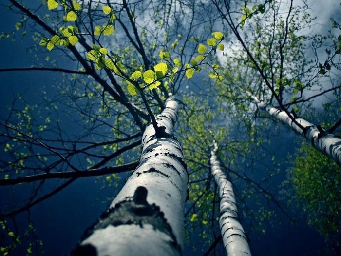 весенние пейзажи 39