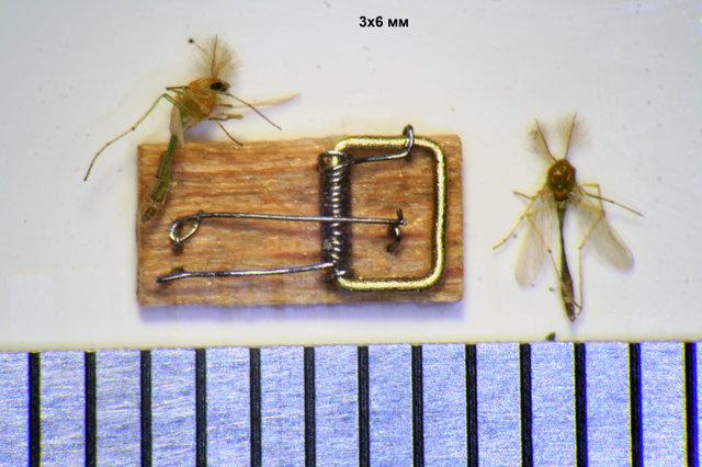 самая маленькая мышеловка в мире