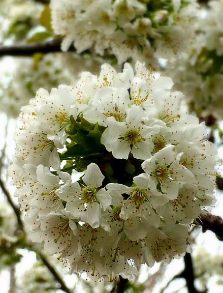 цветочный хоровод 16780