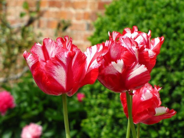 цветочный хоровод 14582