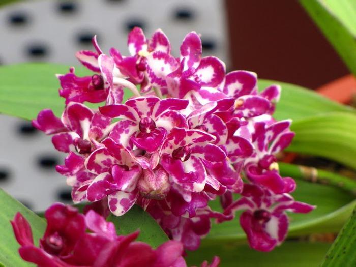 цветочный хоровод 36368
