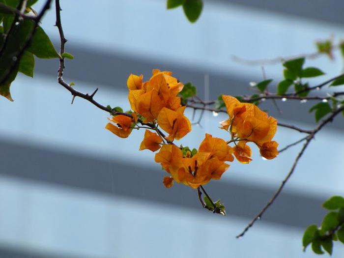цветочный хоровод 23108