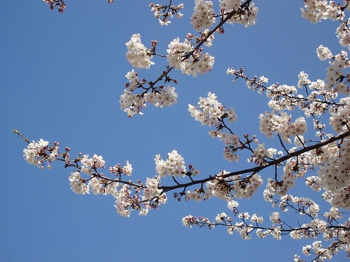 цветочный хоровод 61748