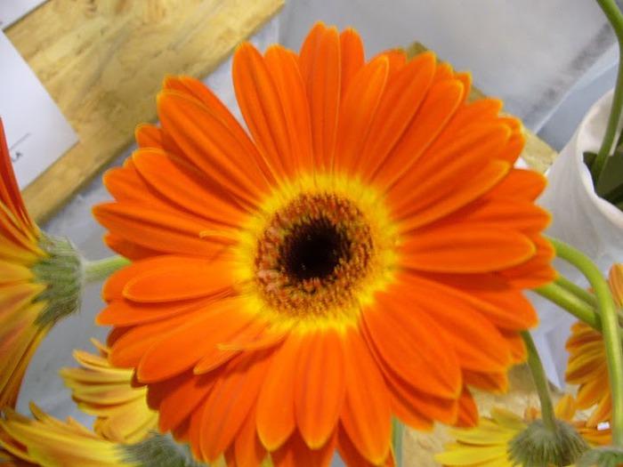 цветочный хоровод 34333