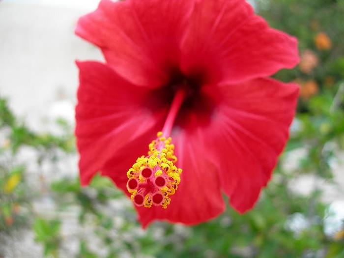 цветочный хоровод 55609