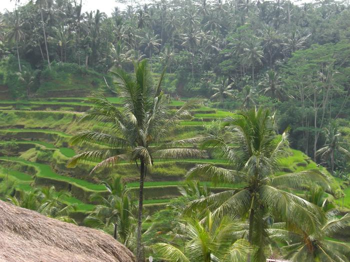 Bali 18-20 fevral 2011 012 (700x525, 389 Kb)